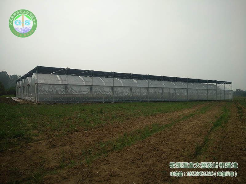 郑州薄膜温室,郑州连